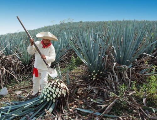 What Do You Actually Know About Tequila?