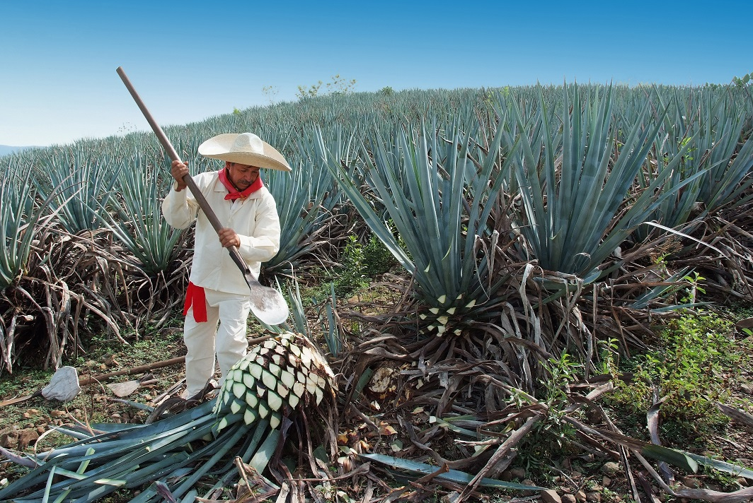 About Tequila